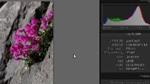 Adobe Lightroom 3: Needle in a Haystack