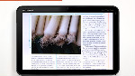 Erstellen von digitalen Magazinen mit InDesign CS5.5 und der Adobe Digital Publishing Suite