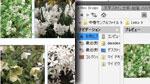 複数画像を一括して配置/間隔ツール