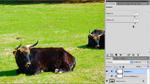 Beispiel in Photoshop CS5: Sättigung und Dynamik