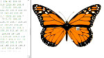 Adobe Dreamweaver CS5.5 : Mise à jour de webkit